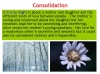 A Frosty Night (Graves) Teaching Resources (slide 13/39)