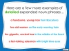 Expanded Noun Phrases - KS3 Teaching Resources (slide 12/48)