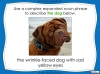 Expanded Noun Phrases - KS3 Teaching Resources (slide 45/48)