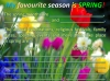 Four Seasons and Five Senses Teaching Resources (slide 16/18)