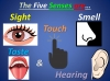 Four Seasons and Five Senses Teaching Resources (slide 8/18)
