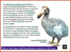 Get Ready for the SATs - Grammar and Punctuation (slide 143/175)