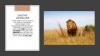 King of the Jungle Teaching Resources (slide 19/57)
