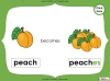 Singular Nouns to Plural Nouns  - Year 1 Teaching Resources (slide 53/67)