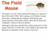 The Field Mouse (slide 8/25)