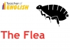 The Flea (Donne) Teaching Resources (slide 8/39)