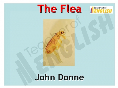 The Flea (Donne) Teaching Resources